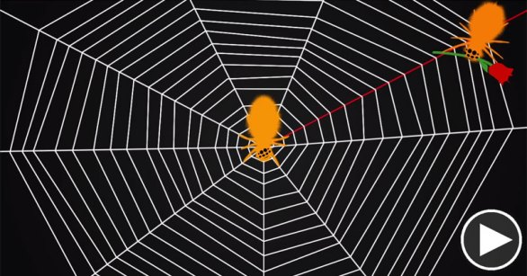 spiders-tune-their-webs-like-guitars