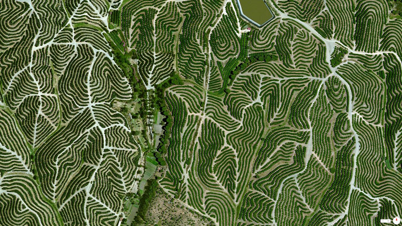vineyards in huelva spain from above aerial satellite 17 Satellite Photos Around the World that Will Change Your Perspective