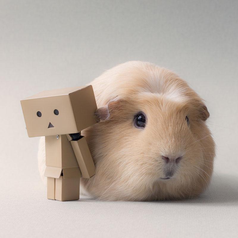 Worlds cutest piglet - photo#13