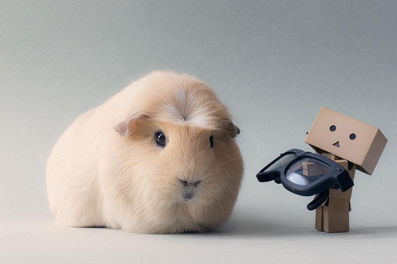 Worlds cutest piglet - photo#17