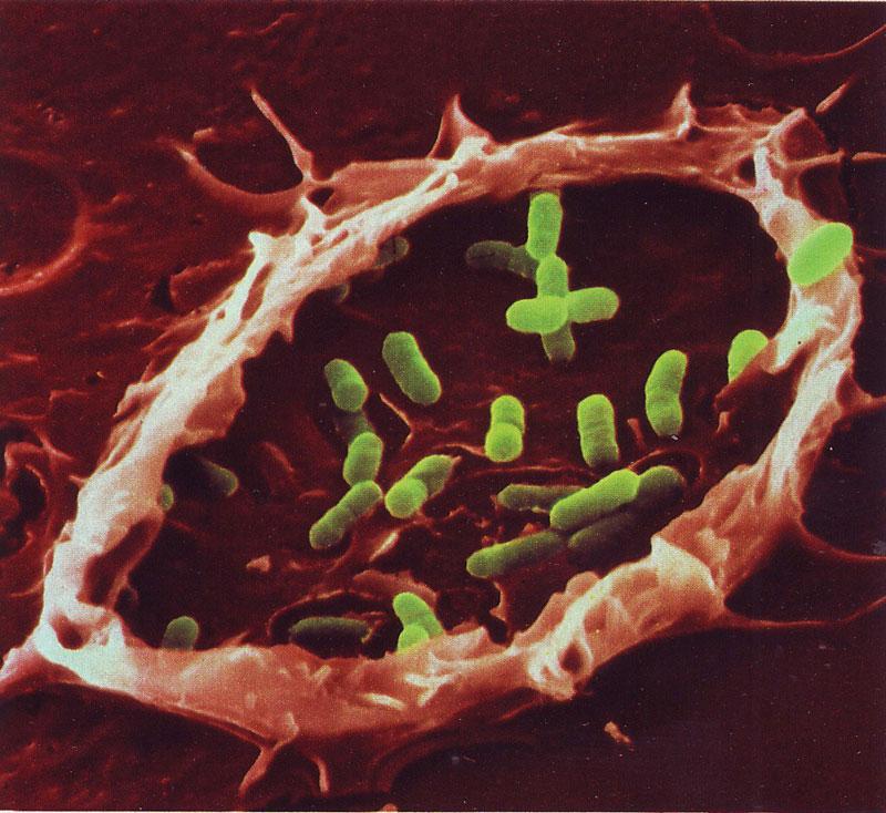 07---Bacteria-Trap