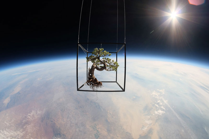 A Bonsai Tree in Space