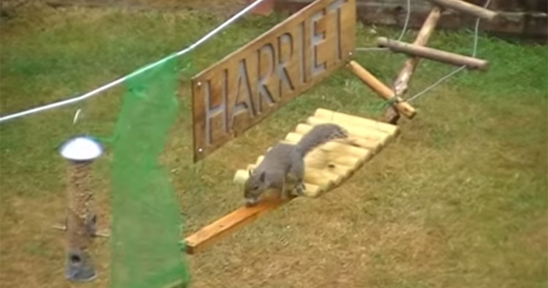 This Guy Built An Obstacle Course For Squirrels And
