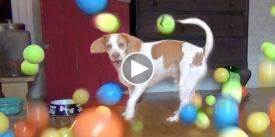 Dog Gets Surprised with 100 Balls for His Birthday