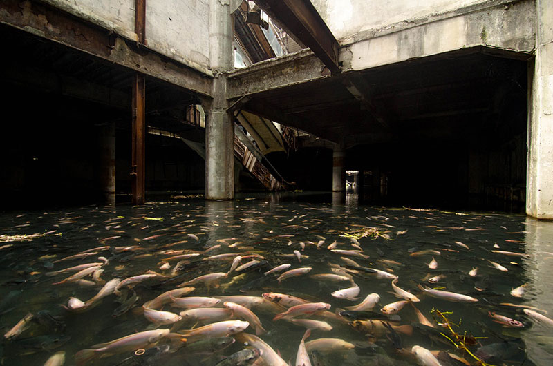 flooded abandoned mall with fish bangkok thailand The Top 100 Pictures of the Day for 2014