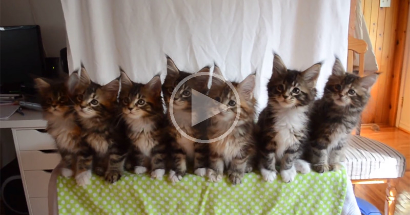 kittens-reacting-in-unison-to-shiny-object-video