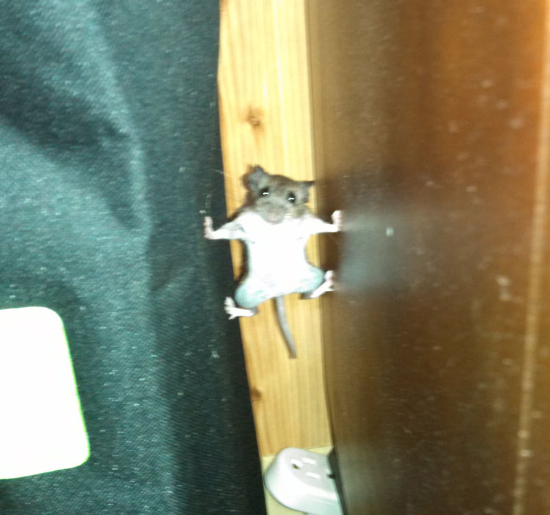 mission impossible mouse The Shirk Report   Volume 273