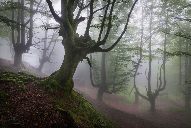 mystical forest in spain gorbea natural park (1)