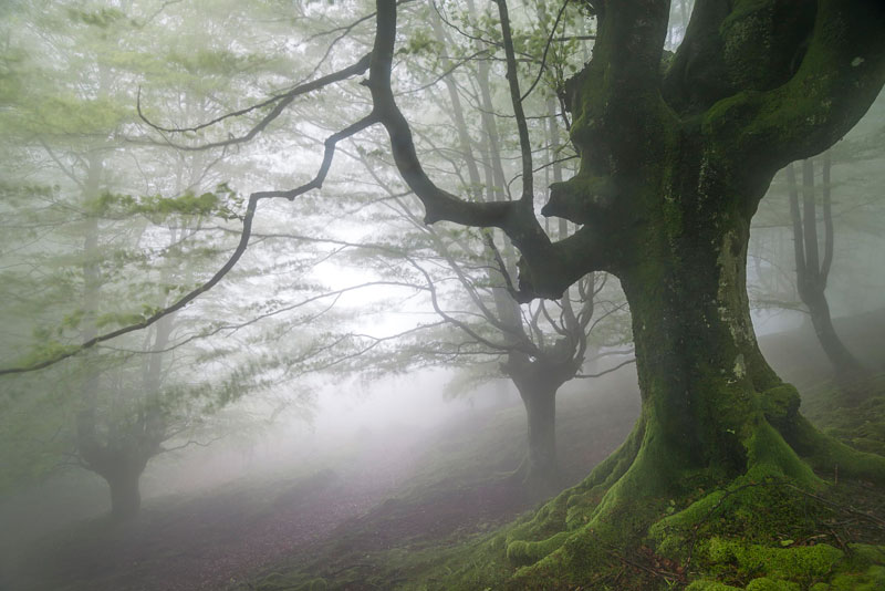 mystical forest in spain gorbea natural park (2)