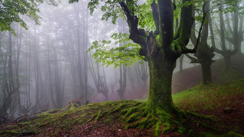 mystical forest in spain gorbea natural park (5)