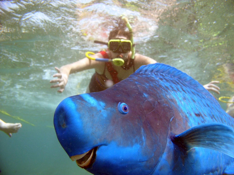 parrotfish-photobomb
