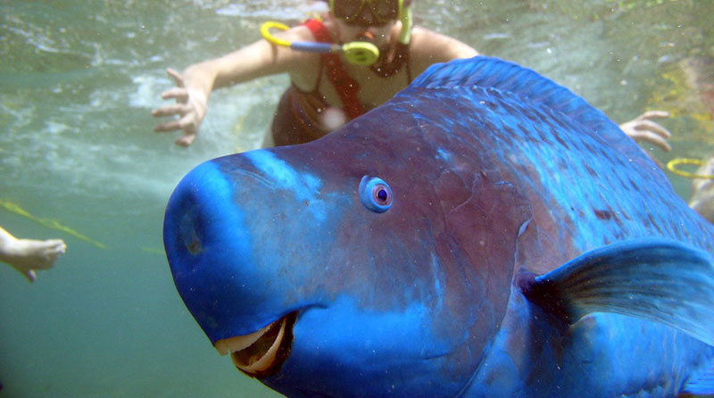 Picture of the Day: This Parrotfish Photobomb isPerfect