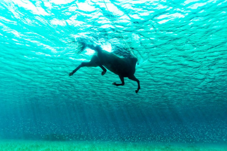 sea-horse swimming underwater photo