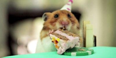 Two Hamsters. One Hedgehog. One TinyCake
