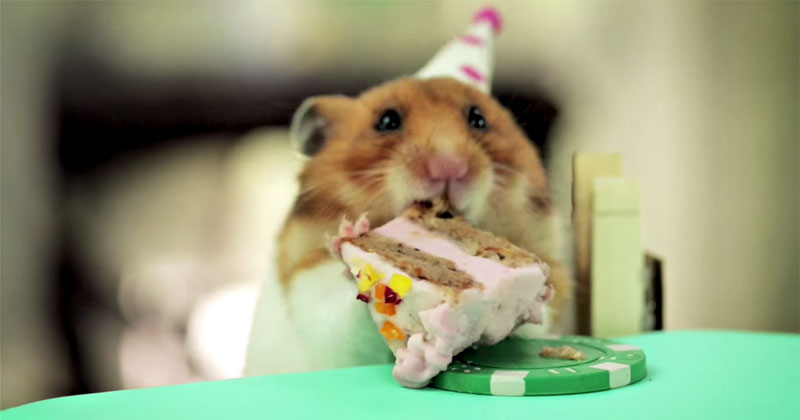 Two Hamsters. One Hedgehog. One Tiny Cake