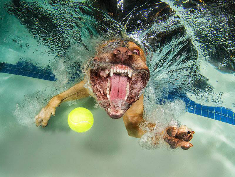 Underwater Photos Of Dogs Fetching Their Balls By Seth