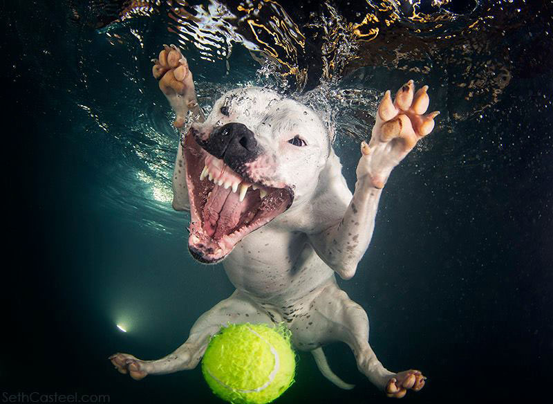 Underwater Pictures Of Dogs Fetching