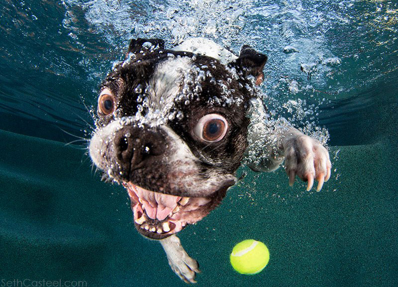 underwater photos of dogs fetching their balls by seth casteel (3)