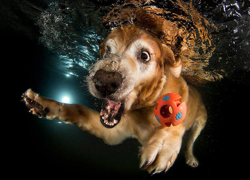 underwater photos of dogs fetching their balls by seth casteel (4)