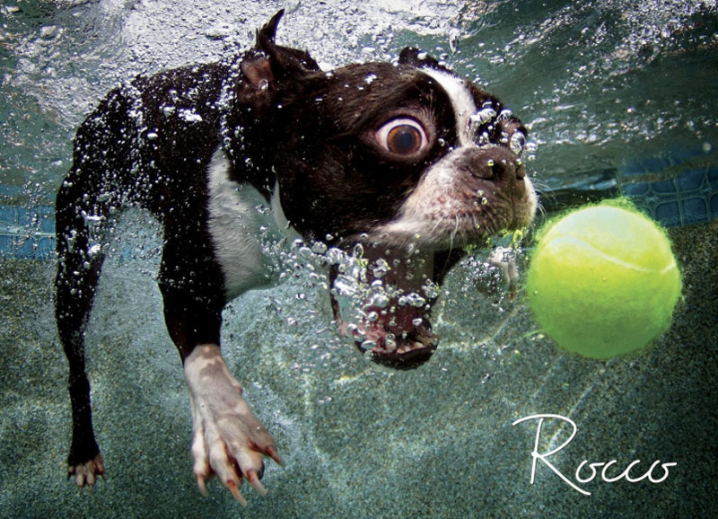 underwater photos of dogs fetching their balls by seth casteel (5)