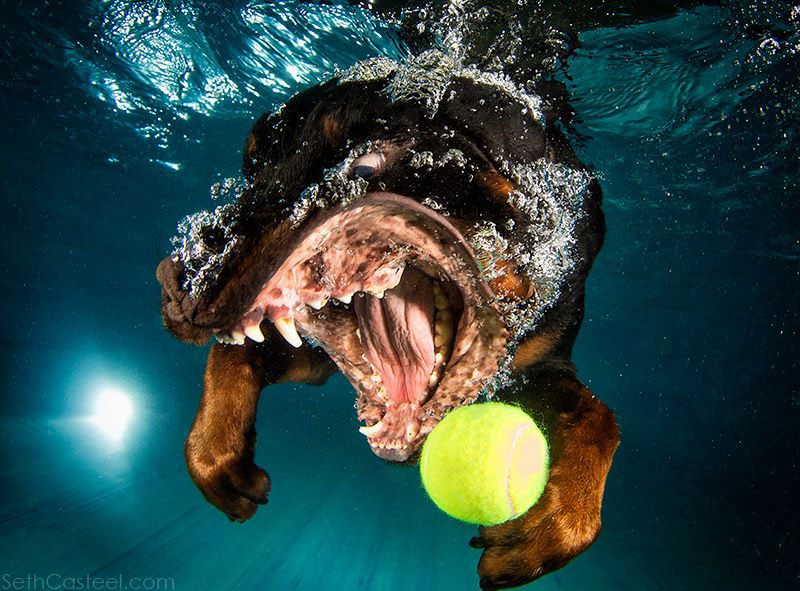 underwater photos of dogs fetching their balls by seth casteel (6)