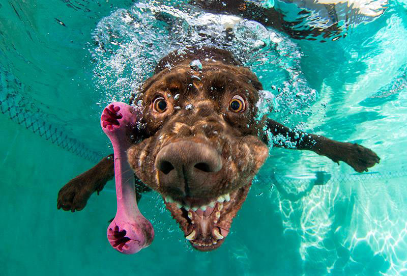 Underwater Photos Of Dogs Fetching Balls Twistedsifter