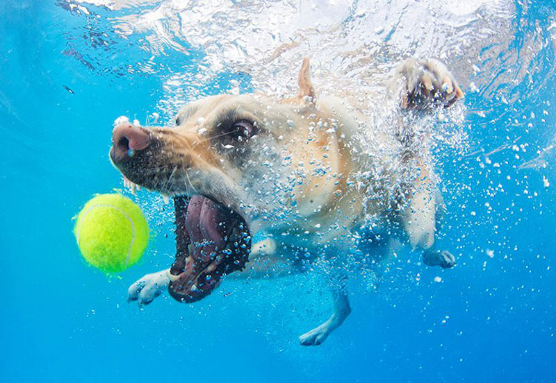 underwater photos of dogs fetching their balls by seth casteel (9)