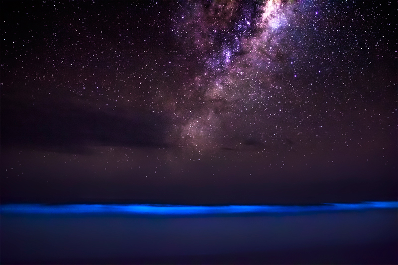 Picture of the Day: When Bioluminescence Meets the Cosmos