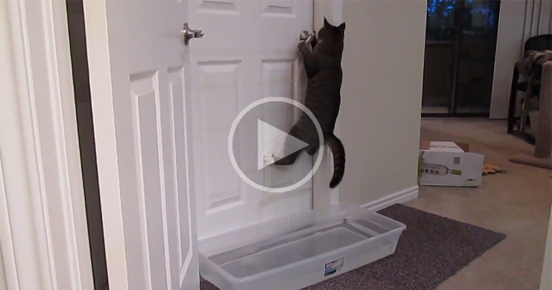 cat-opens-doors-video