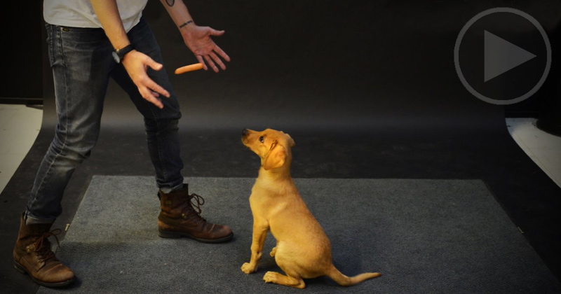 Dogs React to a Levitating Hot Dog