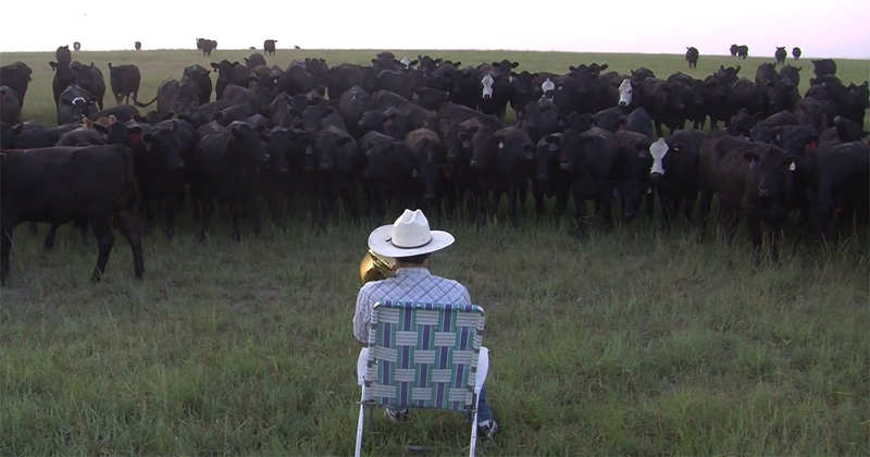 Farmer Serenades Cattle with Trombone Rendition of Lorde's Royals