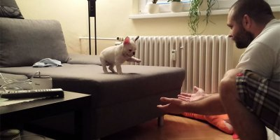 French Bulldog Conquers Fear and Takes First Big Leap