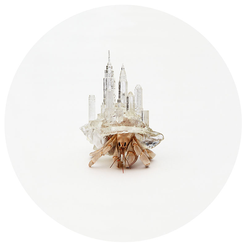 Artist 3D Prints Shells with Tiny Skylines for Hermit Crabs