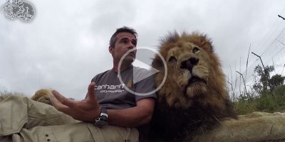 Tau the Lion Makes an Impassioned PSA for World Lion Day