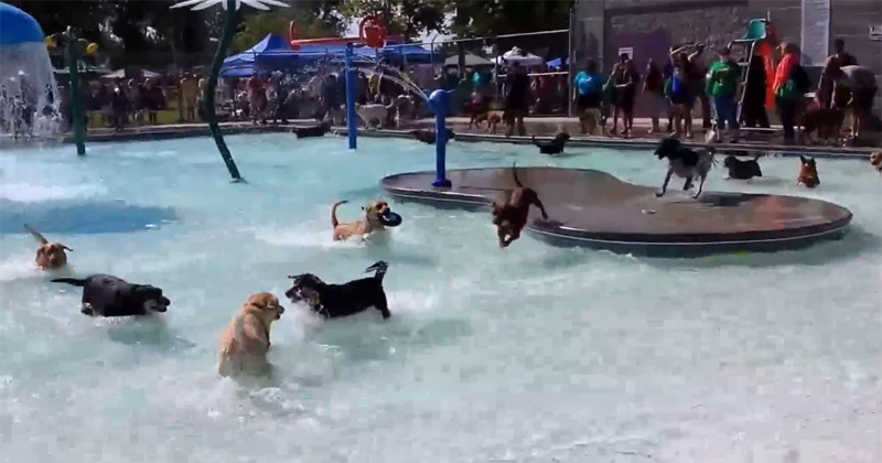 At the End of Each Season, this Pool has a Day Just forDogs
