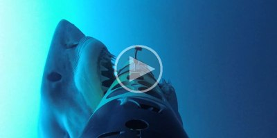Shark Cam Captures More Than It Bargained For