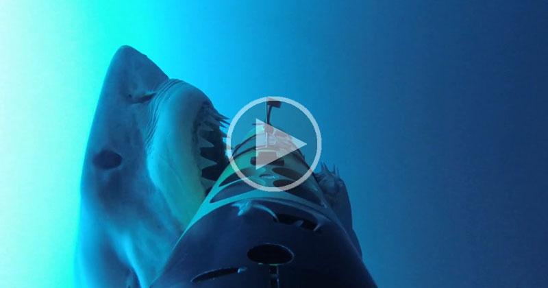 Shark Cam Captures More Than It BargainedFor