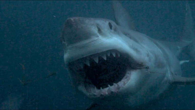The Problem with SharkWeek