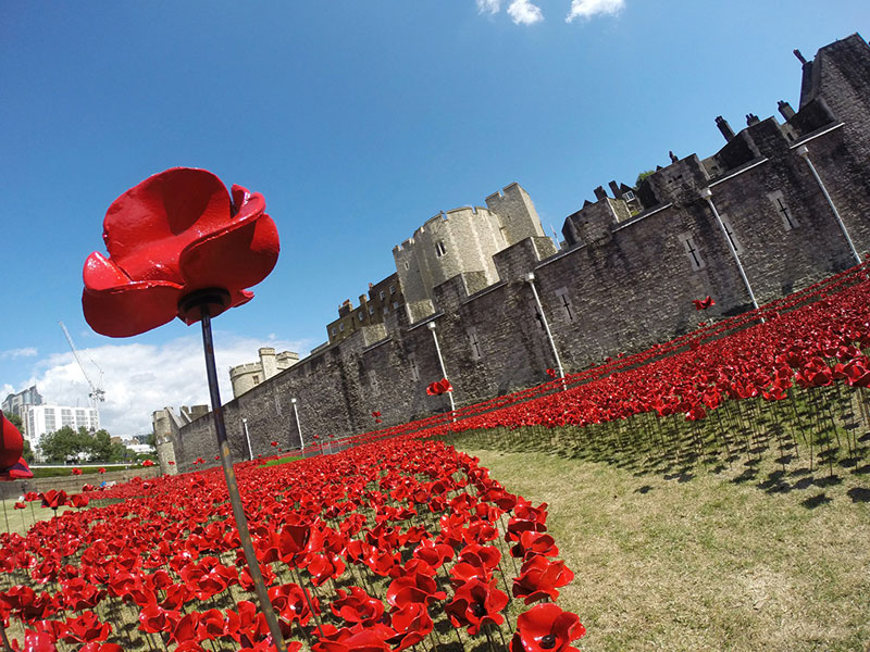 Tower of London's 888,246 Ceramic Poppies Commemorate Every British Soldier Lost in WWI (5)