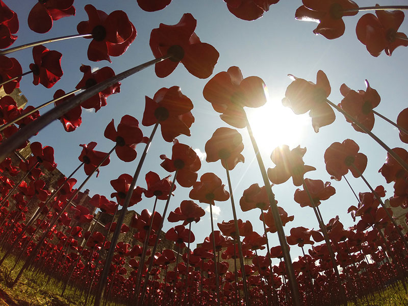 Tower of London's 888,246 Ceramic Poppies Commemorate Every British Soldier Lost in WWI (7)