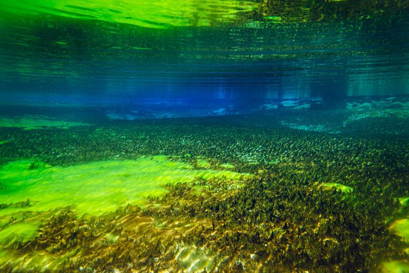 worlds clearest lake blue lake nelson nz (4)