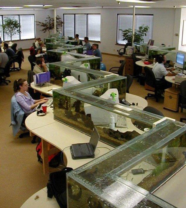Office Aquarium Doubles as DeskDivider