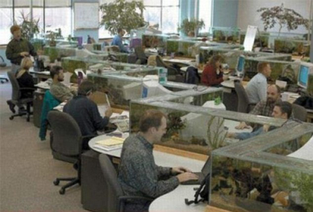 Office Aquarium Doubles as Desk Divider TwistedSifter