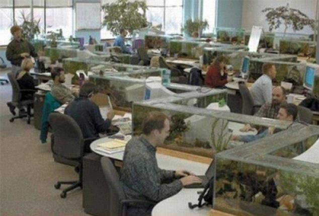 Contemporary Office Fish Tank Zag Aquarium Also A Desk Divider 2 W Inside Decorating Ideas