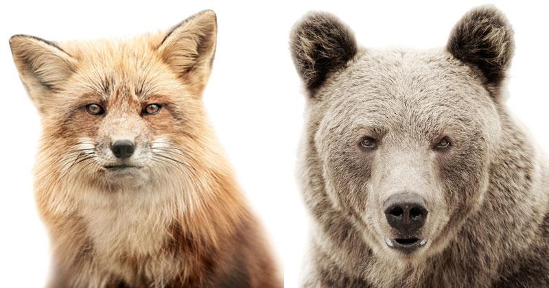 Animal Portraits on Stark White Backgrounds by MortenKoldby