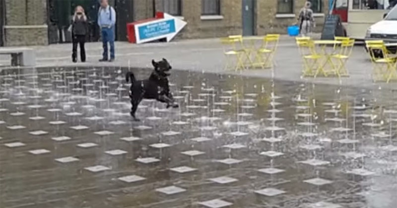 dog-playing-in-water-fountain-video