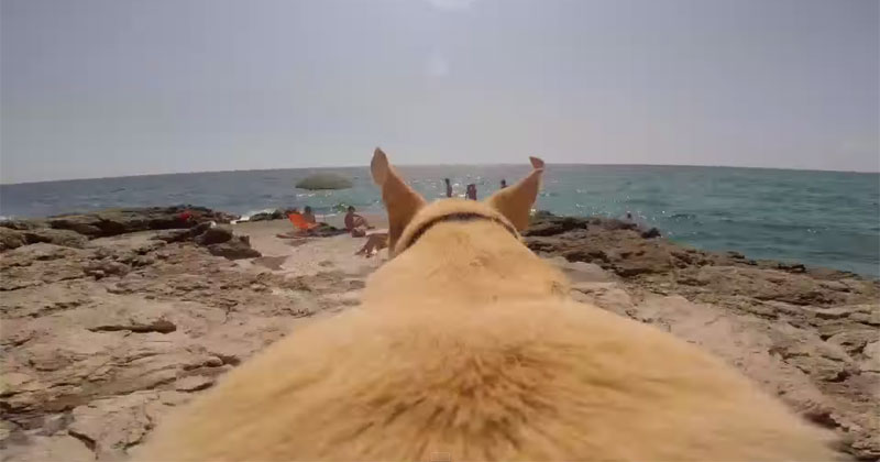 dog runs as fast as he can to jump into the water gopro