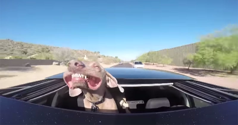 Camera Captures Dog on Car Ride with SunroofOpen