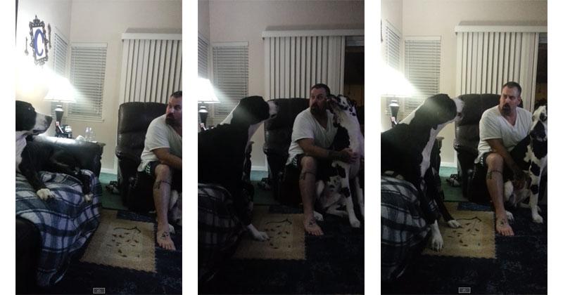 Great Dane and Best Friend Discuss BellyRubs