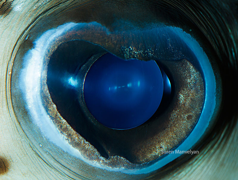 14 Extremely Detailed Close-Ups of Animal Eyes «TwistedSifterAnimal Eye Close Up